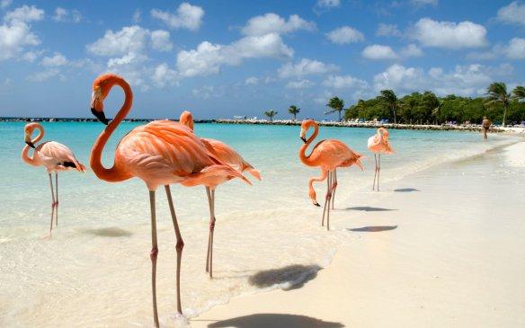 Hotels in Aruba – Hotels Booking